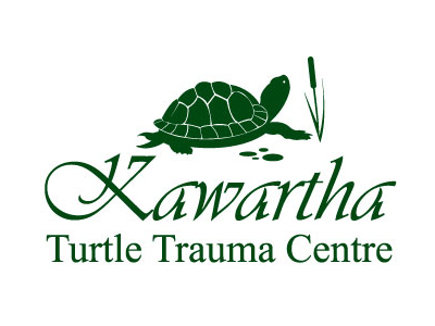 Kawartha Turtle Trauma Centre